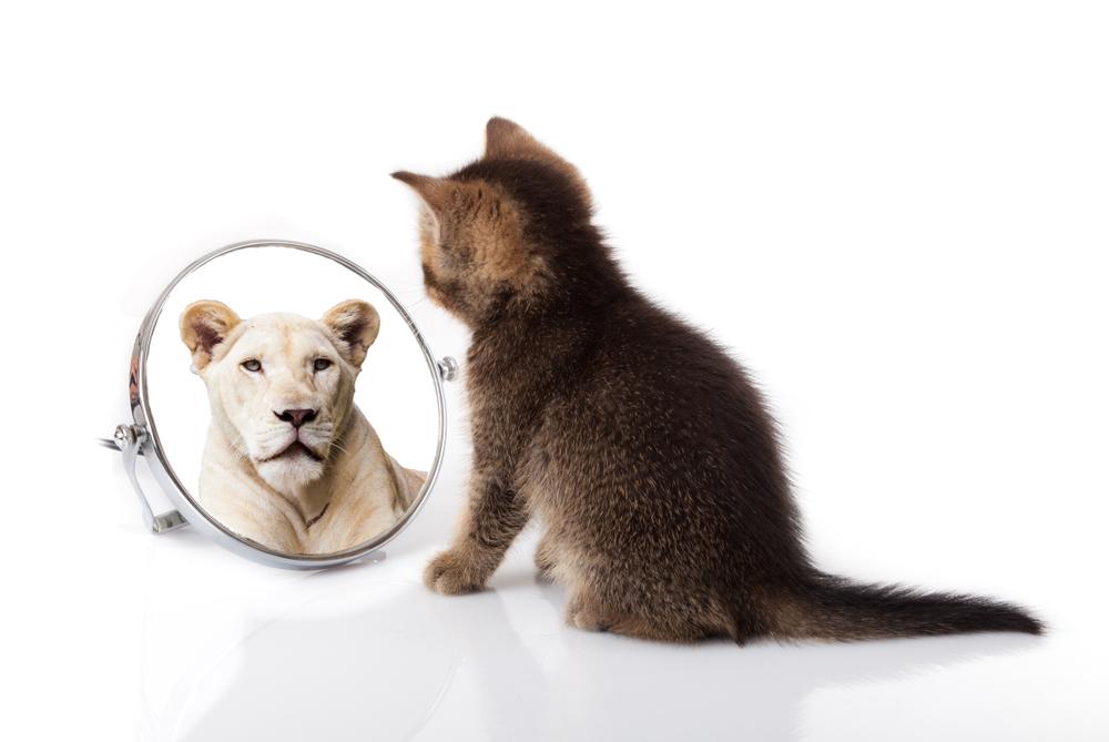 Ken jij jezelf? 5 tips voor meer zelfinzicht